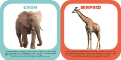 Малышарики 1+. Животные зоопарка